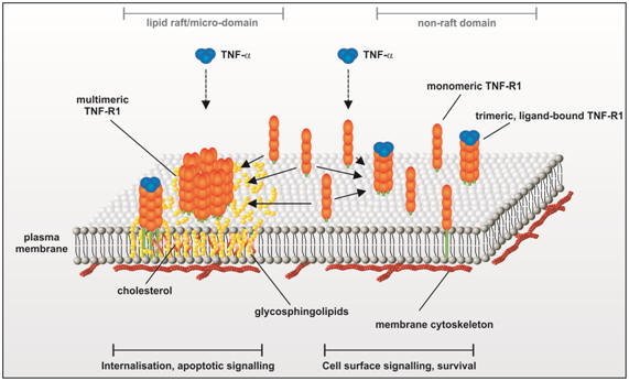 photoswitches for biomolecules Biomolecules 1what are of azobenzene that enable its use as a photoswitch in biological systems and describes strategies for using azobenzene photoswitches to.